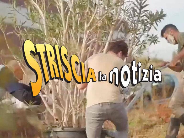 """Piantumazione Selvaggia a """"Striscia la Notizia"""""""